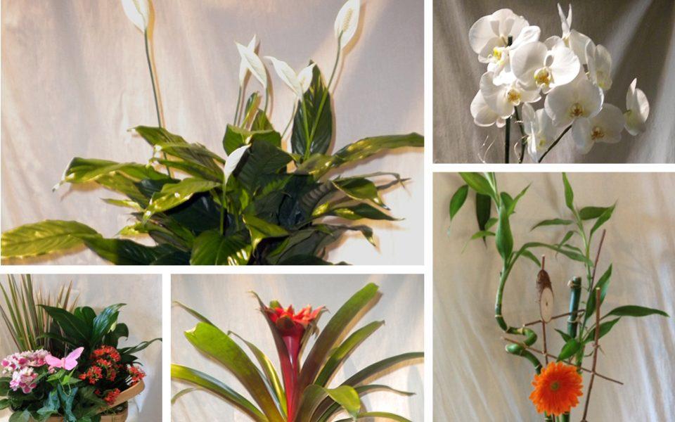 Feature_7 – Plantes